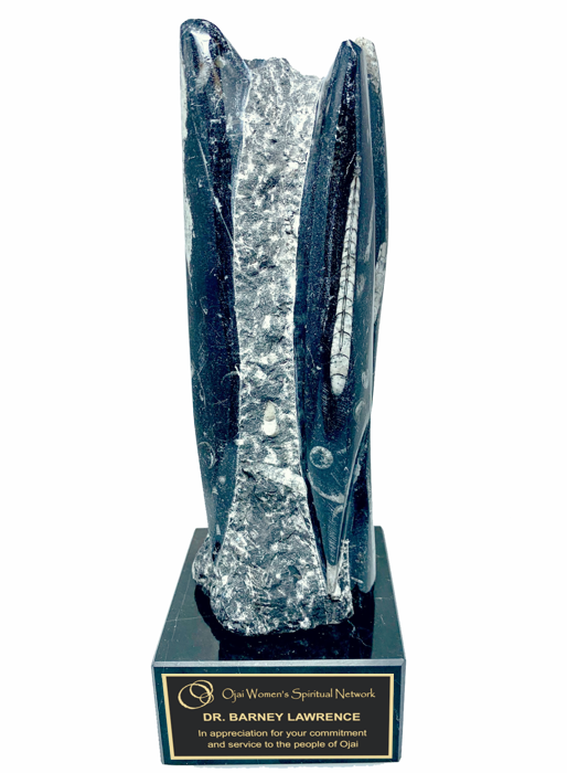 Black Orthoceras Fossil Trophy Award - 9-1/2
